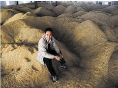 AP经济学:谷贱为什么伤农?